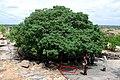 Rajula Mandagiri Ashoka Minor Rock Edict.jpg
