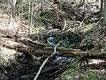 Raymondskill Falls - Pennsylvania (5678046450).jpg