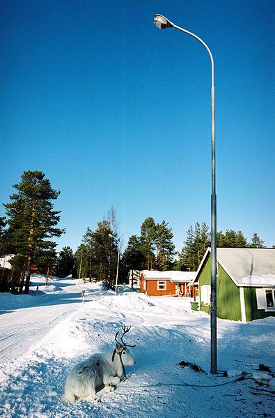 File:Rein i nabolaget, Jokkmokk, Karin Beate Nosterud.jpg