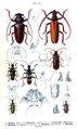 Reitter-1912 bugs3130.jpg