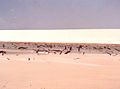 Remains of restinga vegetation buried by sand transportation in Lençóis Maranhenses National Park - ZooKeys-246-051-g001-B.jpeg
