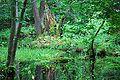 Rezerwat ochrony scisłej BPN 09.jpg