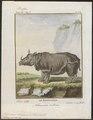 Rhinoceros unicornis - 1700-1880 - Print - Iconographia Zoologica - Special Collections University of Amsterdam - UBA01 IZ22000239.tif
