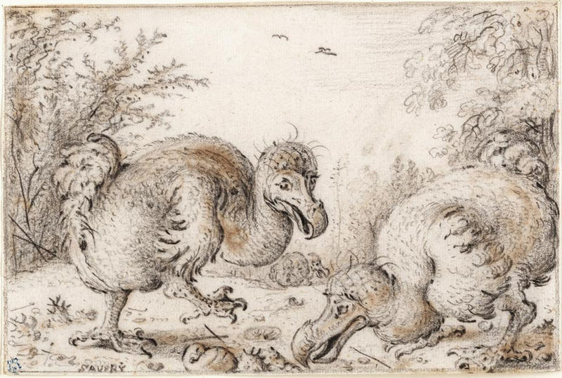 File:Roelandt Savery - 'Dodo Birds', Chalk, black and amber on cream paper.jpg