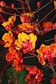 Round flowers.jpg