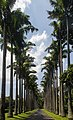 Royal Botanical Gardens, Peradeniya - panoramio (3).jpg