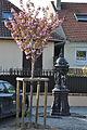 Rueil-Malmaison Rue Guynemer 001.JPG