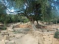 Ruines Romaines Tipaza 37.jpg