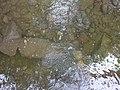 Ruisseau de Loverchy @ Parc du Val Vert @ Seynod (50884892367).jpg