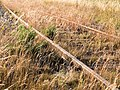 Rusty tracks turned to gold by evening sun 3.jpg