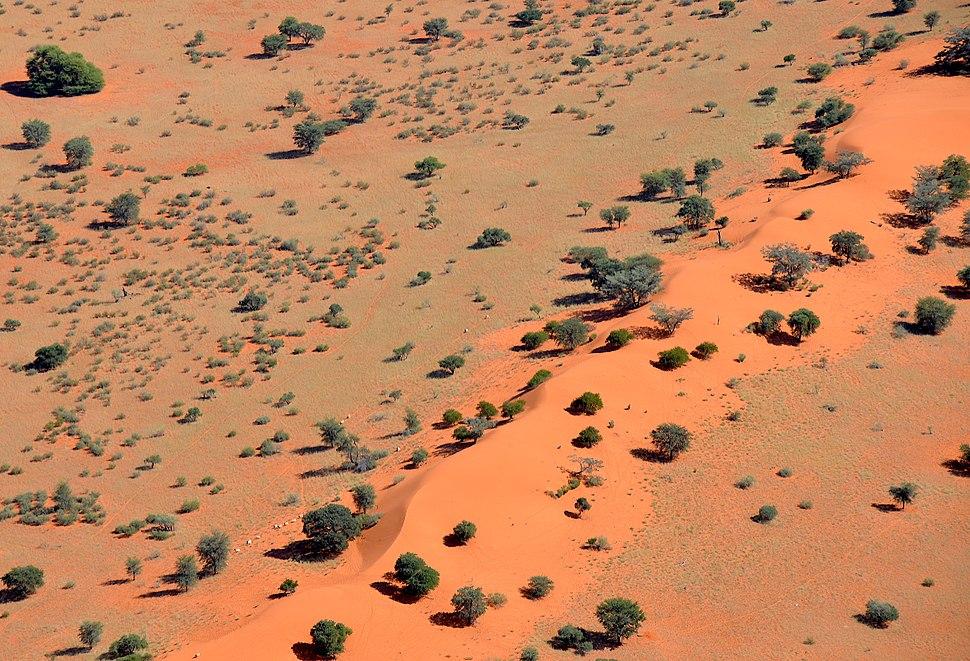 Sand dune in the Kalahari Desert (Namibia)