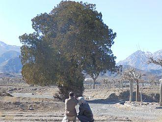 Kūh-e Tīr Māhī - Sarv Zibad and mount zibad