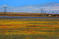 Save the Wildflowers (16570853769).jpg