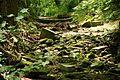 Schledde Soest,Stadtpark,Wehr,Flussbett,trockengefallen 2016-05-28.jpg