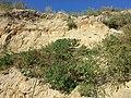 Schottergrube nordwestlich von Asparn an der Zaya sl11.jpg