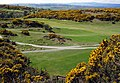 Scrabo Golf Course - geograph.org.uk - 780487.jpg