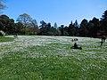 Sea of Daisies at Kew Gardens.jpg