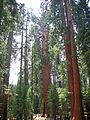 Sequoia National Park - Flickr - GregTheBusker (1).jpg