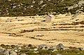 Serra Estrela (8125017322).jpg