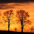 Setting sun behind treelined fence at Muiralehouse - geograph.org.uk - 340040.jpg