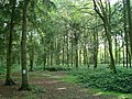 Shoreham Woods - geograph.org.uk - 1397649.jpg