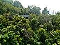 Singapore Southern Ridges Hilltop Walk 10.jpg