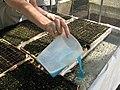 Sistema Flotante Fertilización.jpg