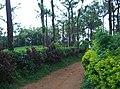 Sitargundu Estate, Kollengode South, Kerala 678508, India - panoramio (15).jpg