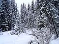 Skiing kananaskis 023.jpg
