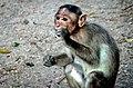 Smoking monkey is smoking (5581380894).jpg