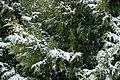 Snow falling on cedars 2.jpg