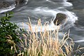 Sochi national park. Water flows on the rapids of the Mzymta river.jpg