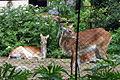 Sofia Zoo E6.jpg