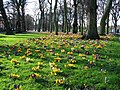 Spring in the Meadows, Edinburgh - geograph.org.uk - 350540.jpg