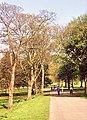 Springtime walkers in Bute Park - geograph.org.uk - 738389.jpg