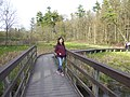 Springwater Boardwalk (50028556392).jpg