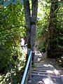 Stairs down to Lochside Trail from Donwood drive. READ INFO IN PANORAMIO-COMMENTS - panoramio.jpg