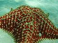 Starfish - Estrella de mar.JPG