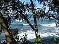 Starr-091104-0720-Pandanus tectorius-habit and ocean waves-Kahanu Gardens NTBG Kaeleku Hana-Maui (24360452393).jpg