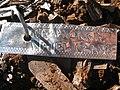 Starr-140117-3976-Citrus sinensis-Cara Cara Navel plant tag-Hawea Pl Olinda-Maui (25239034165).jpg