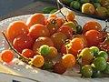 Starr-170108-6450-Solanum lycopersicum-landrace varieties-Hawea Pl Olinda-Maui (32314507742).jpg