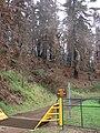 Starr 070908-9116 Pinus sp..jpg