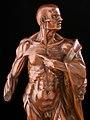 Statue of St Bartholomew, Europe, 1501-1700 Wellcome L0057346.jpg