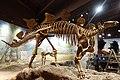 Stegosaurus vernal 2.jpg