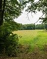 Steinfeld (Pfalz) Lauterniederung 006 2018 08 01.jpg