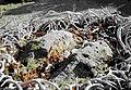 Stone Lions (Yapashi Pueblo).jpg