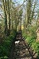 Stour Valley Walk - geograph.org.uk - 403488.jpg