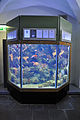 Stralsund, Meeresmuseum, Aquarium (2012-04-10) 6, by Klugschnacker in Wikipedia.jpg