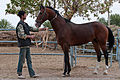 Studfarm in Turkmenistan - Flickr - Kerri-Jo (23).jpg