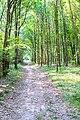 Summer Wood (35494170541).jpg